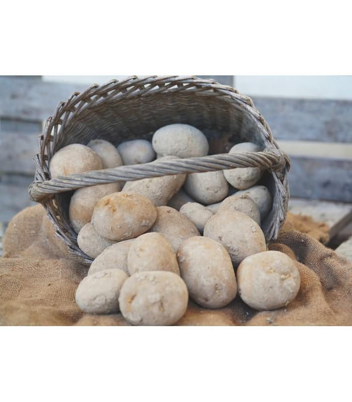 Pomme de terre chair fondante