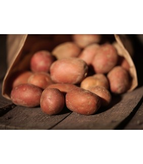 Pomme de terre chair ferme